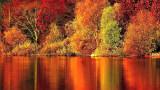 Hojas de otoño Jeannette