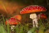 Pin por Jeannette Van der Meer en el otoño