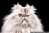 De Perros Sacudiendo Por Carli Davidson Y Un Gato