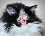 Lea antes de que usted reaccione esto es un gato s...