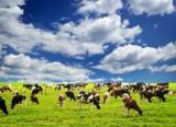 El misterio de las vacas magnéticas Daniel Cressey...
