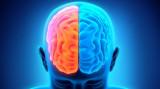 Busting el cerebro izquierdo contra el mito derech...