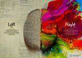 Cerebro izquierdo contra el cerebro derecho