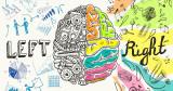 Hemisferios cerebrales y sistema inmunitario